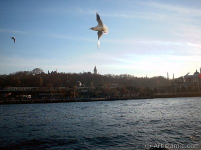 View of Sarayburnu coast, Topkapi Palace, Ayasofya Mosque (Hagia Sophia) and the sea gulls from the sea in Istanbul city of Turkey.