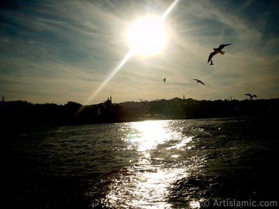 View of Eminonu coast and the sea gulls from the sea in Istanbul city of Turkey.