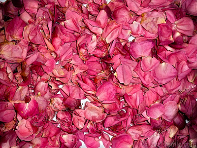 Rose leaves. <br>Photo Date: January 2002, Location: Turkey/Istanbul-Mother`s Flowers, By: Artislamic.com