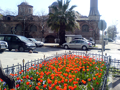 Turkish-Ottoman Tulips.