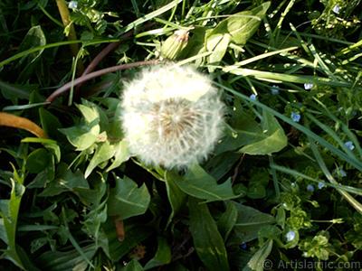 Bir bitki resmi. <br>Çekim Tarihi: Ocak 2002, Yer: İstanbul-Üsküdar, Fotoğraf: islamiSanat.net