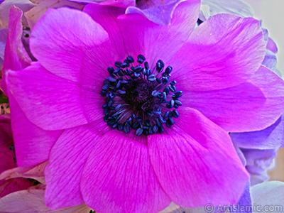 Mor çiçeklerden oluşan bir demet resmi. <br>Çekim Tarihi: Mart 2006, Yer: Balıkesir-Altınoluk, Fotoğraf: islamiSanat.net